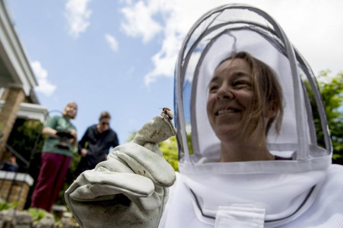 Neighbors hesitantly take a closer look at a bee that rests on beekeeper Erin Gleeson's glove after she helped capture a swarm of honey bees to relocate them to a bee hive, Friday, May 1, 2020, in Washington